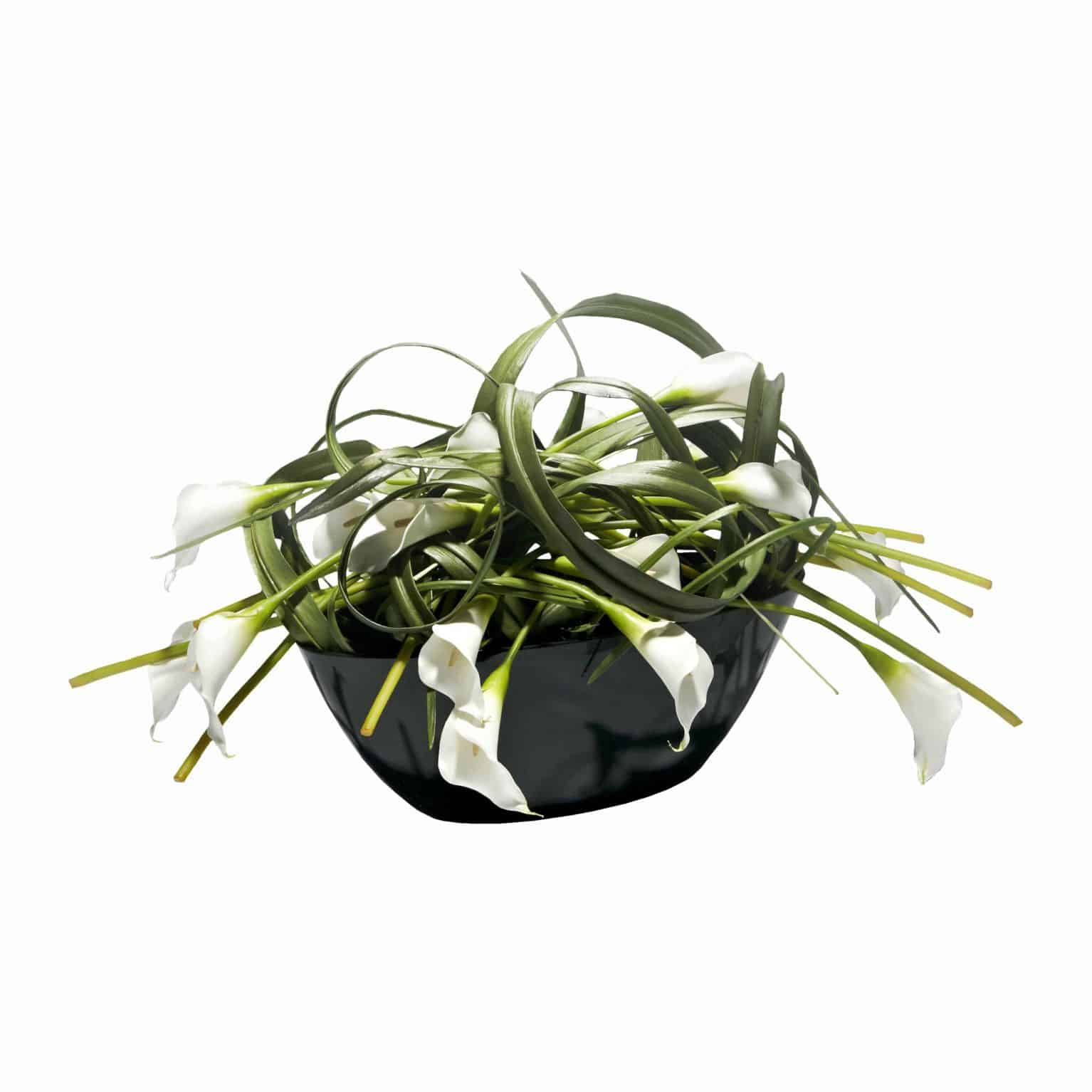 Buy our beautiful disarray of premium silk flowering white calla lilies bound in artificial leaves and stylishly arranged in a black gloss boat shaped pot.