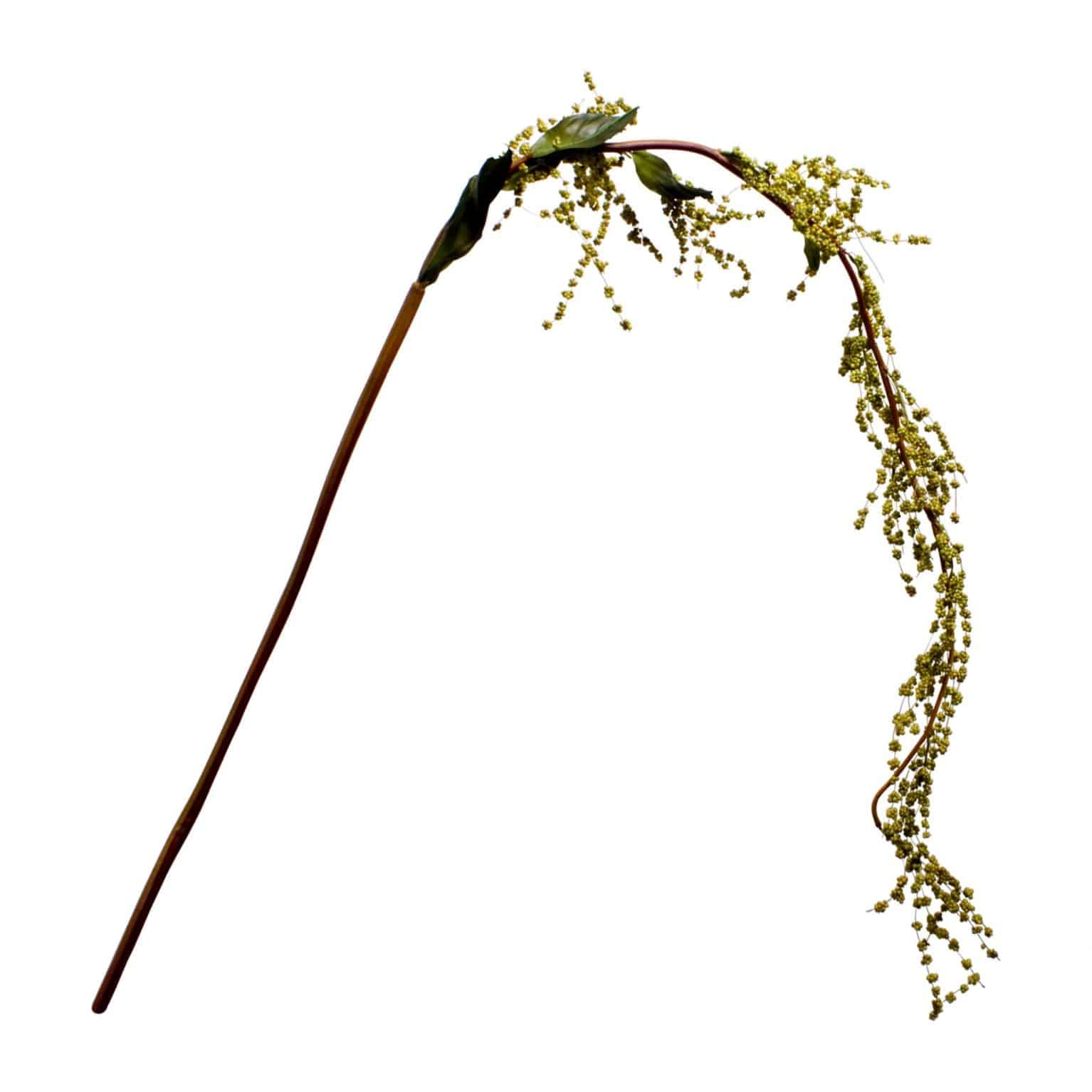 Natural looking knotweed stem spray is made of tiny clusters of berries. The soft green tones and leafs add authenticity to you arrangements.