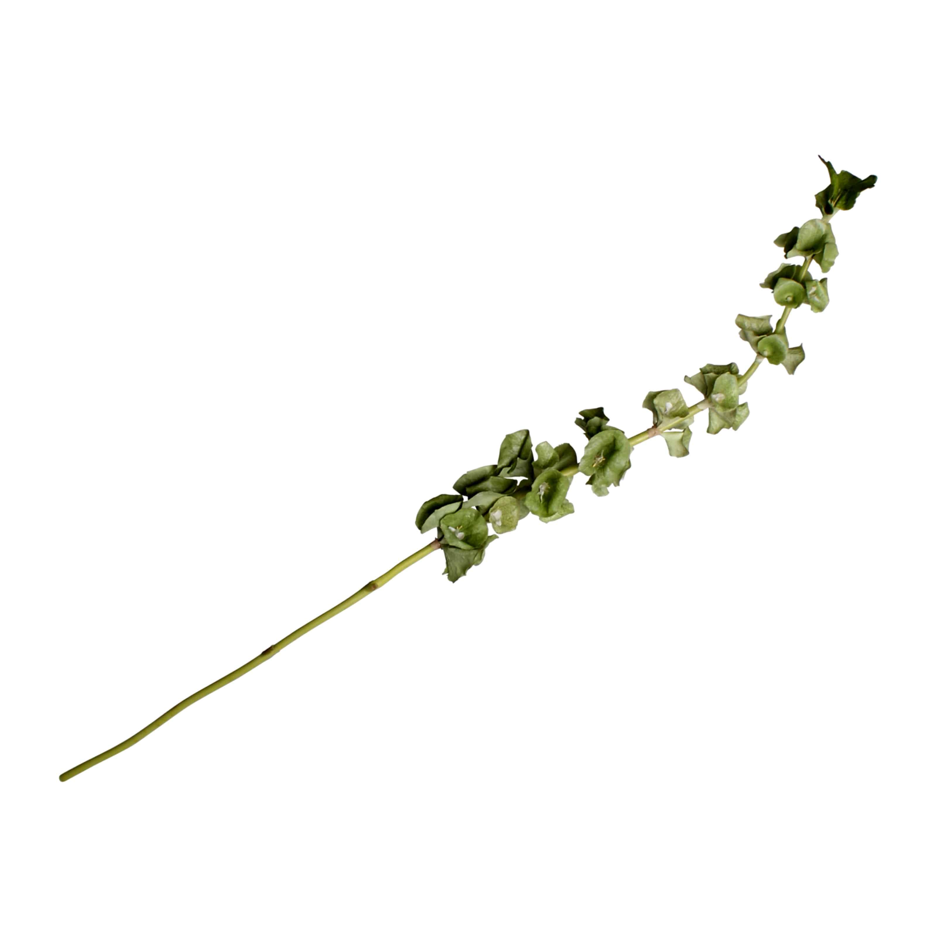 Buy our faux bells of Ireland as the main flower or as incredible foliage for your own creative arrangement. Subtle green shades soften & add life.
