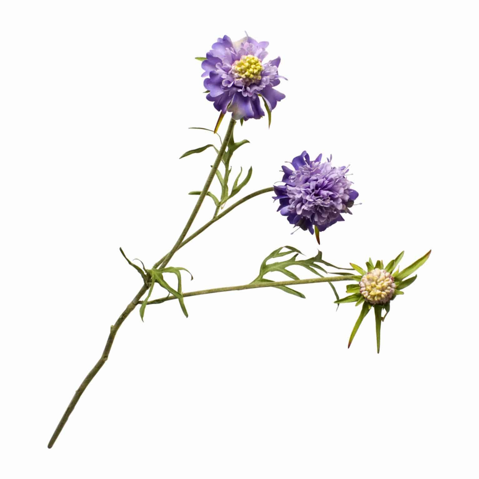 Buy silk faux scabiosa flower