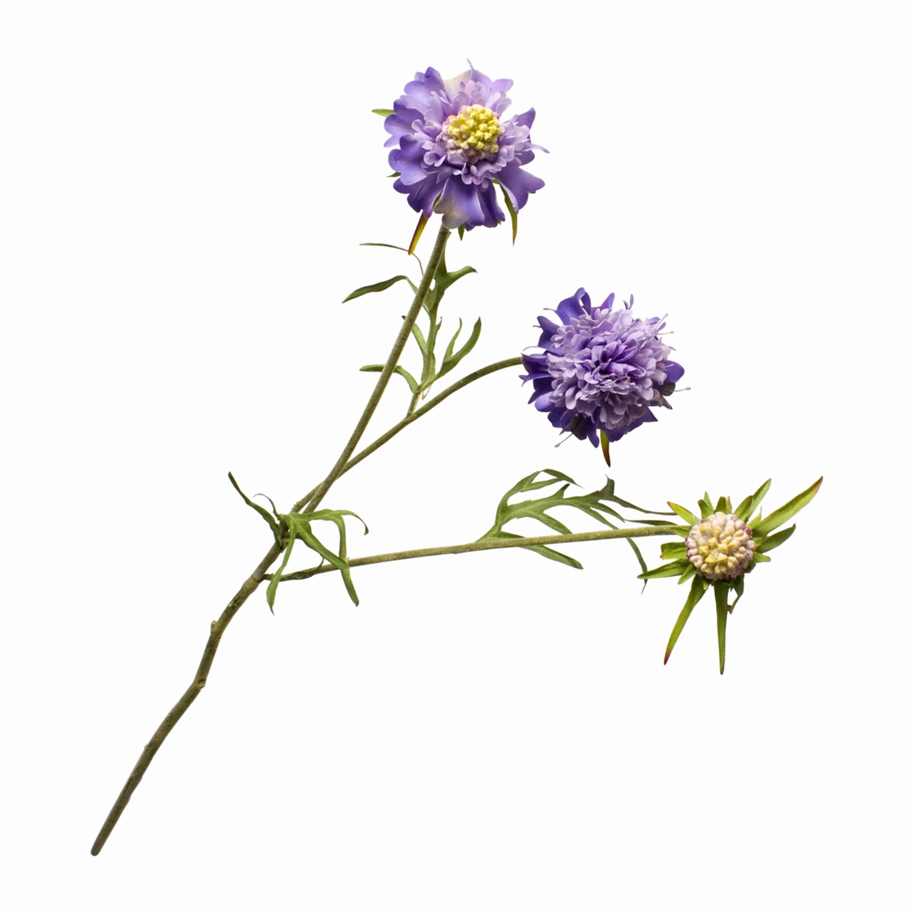 Buy silk faux scabiosa flower