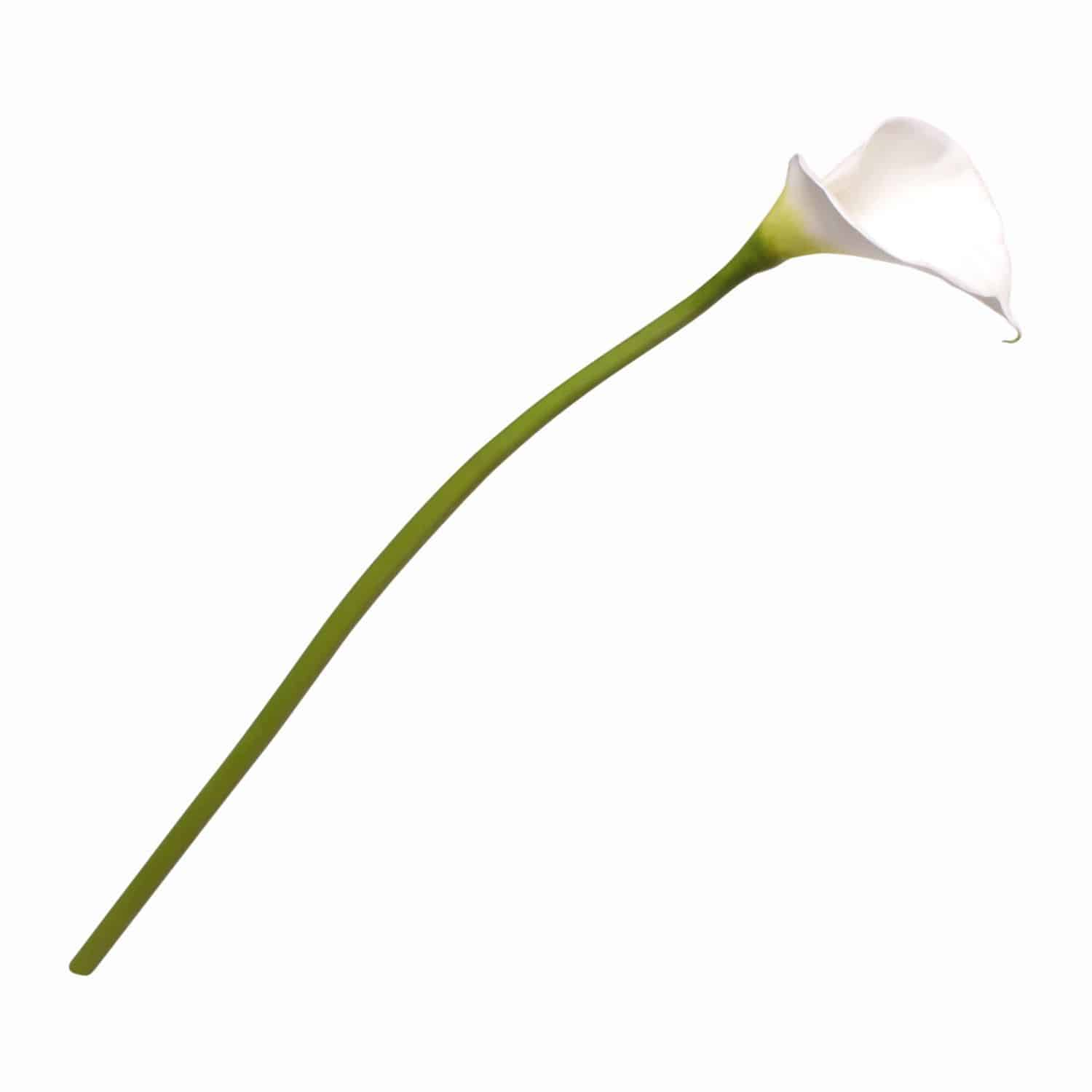 Shop for our best silk flowers. This calla lily is a true match for the fresh flower. Green stem blends into pure white head. Excellent for your modern arrangements.
