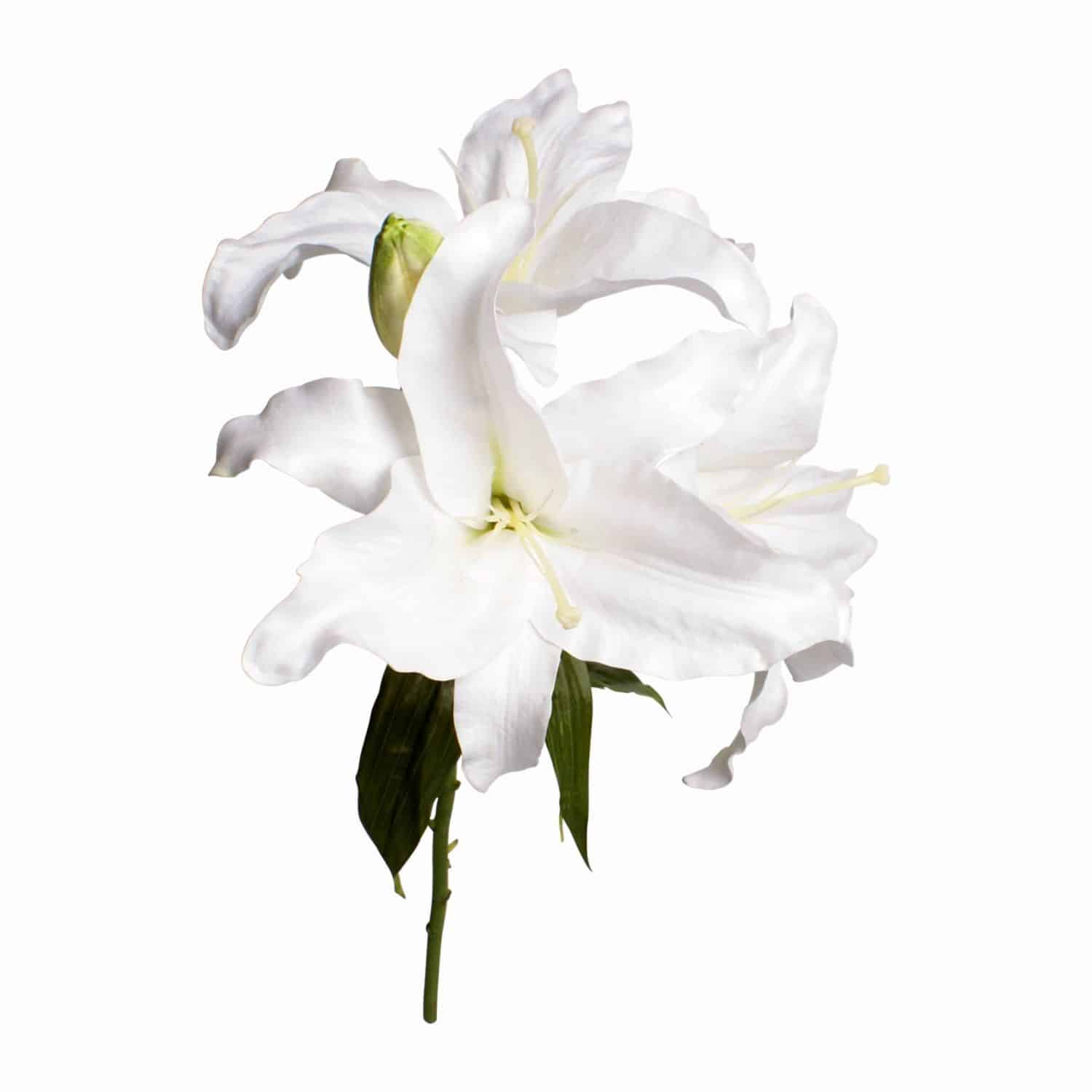 Our Casablanca lilies have three beautiful fully bloomed heads with a natural bud. The natural pure white colour and real touch texture is one of the best we found.