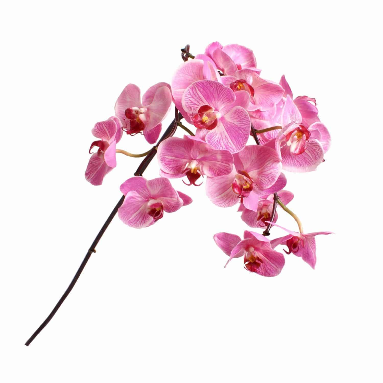 Buy vibrant hot pink silk flower phalaenopsis orchid