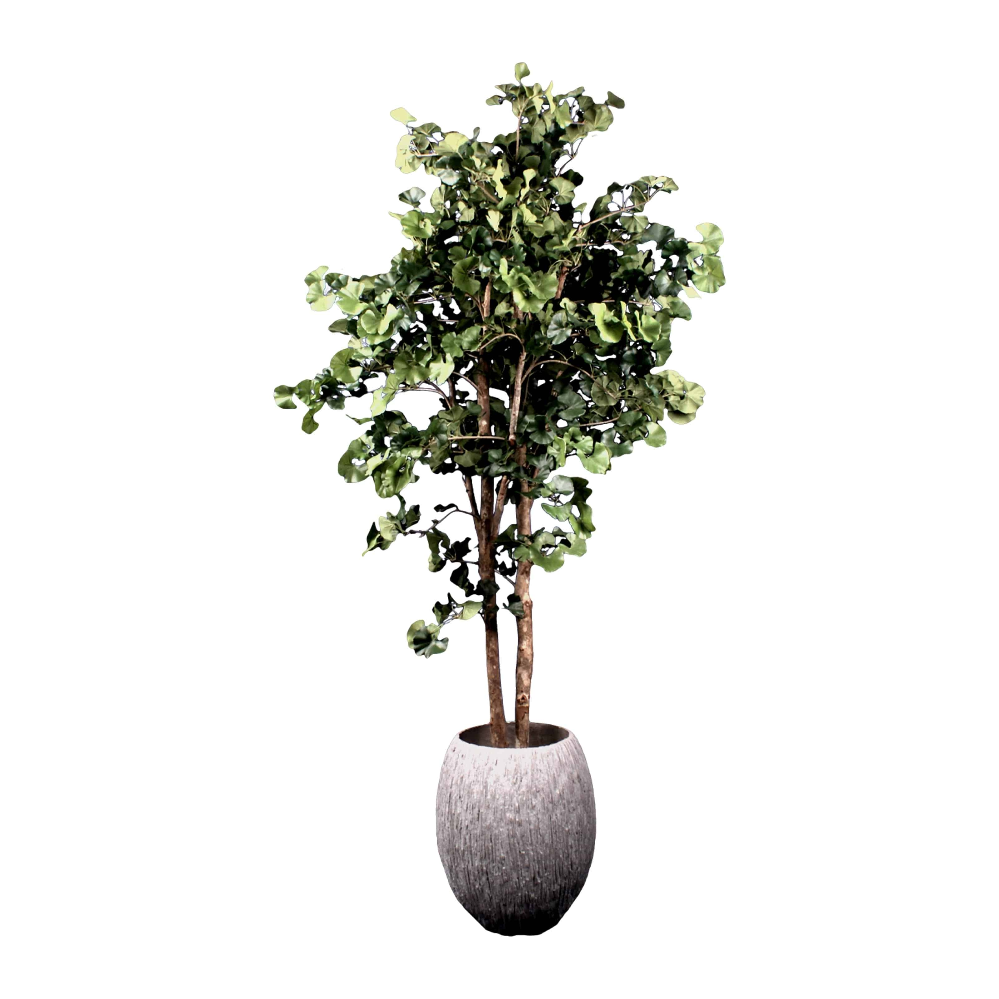 Buy our artificial ginkgo tree with real trunk & natural colouring. Placed in a earthy natural carved pot. Maintenance free & perfect for oriental gardens.