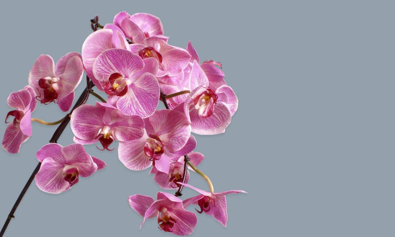 Silk Flower Stems – Online Shopping Boutique